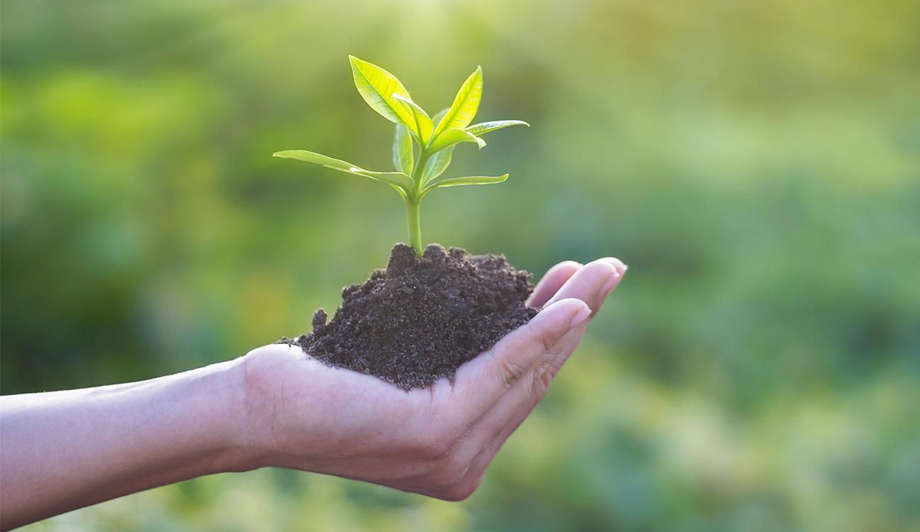 BRITA sustainability hand holding soil with plant
